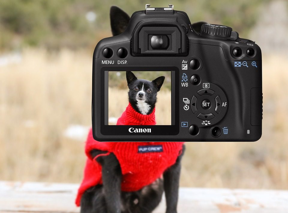 Best Outdoor Pet Camera for 2020 - Post Thumbnail